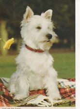 West Highland White Terrier Westie postcard SCOTLAND Scottish  Dog