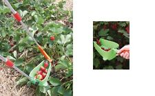 Attrezzo giardino orto per raccogliere le fragole fragola frutta salva schiena