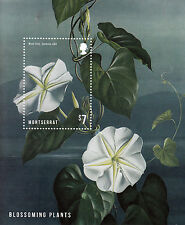 Montserrat 2013 MNH Blossoming Plants 1v S/S Flowers Moon Vine Ipomoea Stamps