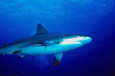 787052 Shark vuelen sobre Cámara A4 Foto Impresión
