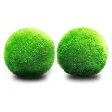 LUFFY Betta Balls : Live Round-Shaped Marimo Plant : Natural Toys for Betta Fish