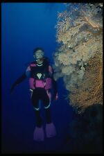 156040 Scuba Diver On Wall Of Pacific Sea Fans A4 Photo Print