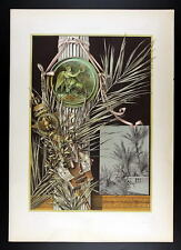1886 SEDER - ART NOUVEAU -  Palm Tree, Laurel – Palme, Lorbeer I