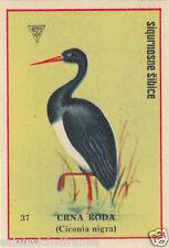 Cigogne noire Black Stork Ciconia nigra ÉTIQUETTE BOITE ALLUMETTE MATCHBOX LABEL