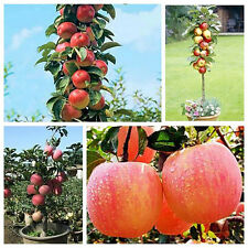 20 Bonsai Apple Tree Seeds Garden Yard Outdoor Living Fruit Plant Fascinating