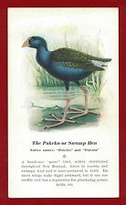 "The Pukeko or Swamp Hen, a handsome ""game"" bird"