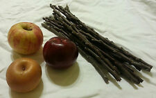 Apple Tree Scions Graft and Grow Your Own Fruit Trees!!  Cuttings Heirloom Pear