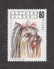 Dog Art Head Study Portrait Postage Stamp YORKSHIRE TERRIER Bulgaria 1991 MNH