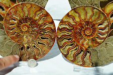 8206 Cut Split PAIR Ammonite Deep Crystal Cavity 110myo Fossil 187mm XLARGE 7.4""