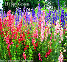 "GIANT LARKSPUR MIX up to 47""- Delphinium Consolida - 300 seeds - Flower"