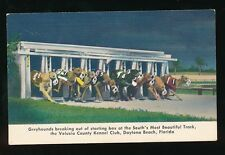 Dog Racing GREYHOUNDS Volusia Kennel Club Daytona Florida USA PPC c1940/50s?