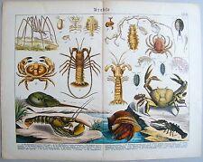 Chromo-Lithografie 1886: Krebse. Molukkenkrebs. Hummer. Languste. Fischassel.