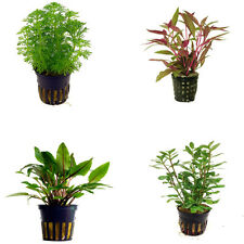 Special Assortment Nr 2 - Aquatic / Terrarium Plants 20 Pots