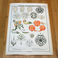 FECONDAZIONE poster manifesto Biologia Vegetale Fiori Monocotideloni Pistillo