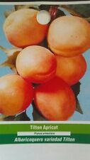4'-5' live TILTON APRICOT TREE Healthy Fruit Trees Natural Plant New Home Garden