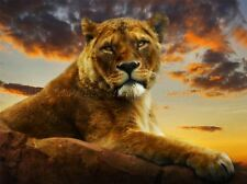 LIONESS AFRICAN SUNSET PHOTO ART PRINT POSTER PICTURE BMP745A