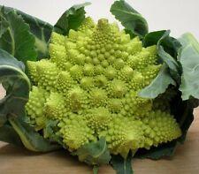 Romanesco broccoli 100 seeds * Unusual form Broccoli * Edible * Ornamental E35