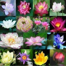 30 Pcs Mix Lotus Seeds Water Flower Aquatic Plants Fragrance Blooming VL4