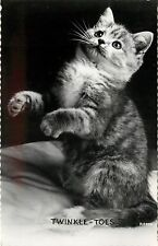 c1950 Real Photo Cat Postcard Fuzzy Tabby Kitten Sits Up, Twinkle Toes, R.P. 268