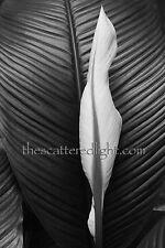 BLACK & WHITE  ART PHOTOGRAPH / 'FOR IMOGEN' / S.F. CA / 12 X 18