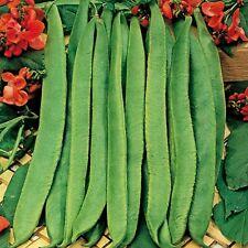 Suffolk Herbs - Runner Bean Scarlet Emperor - Organic - 45 Seeds