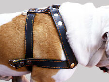 "Genuine Leather Dog Pulling Harness 27""-32"" chest Pit Bull Amstaff, Large Dogs"
