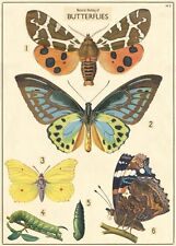 Natural History of Butterflies - Butterfly -  Poster Cavallini & Co 20 x 28 Wrap
