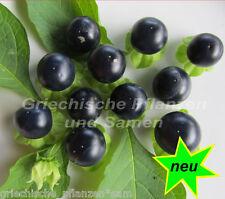 JAL-Tomate AZUL 10 Semillas exótico MUY RARO Tomaten para balcón negro