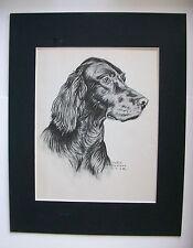 Irish Setter Dog Print Gladys Emerson Cook Profile Bookplate 1945 11x14 Matted