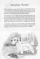 Sealyham Terrier - 1950 Vintage Dog Print - Matted