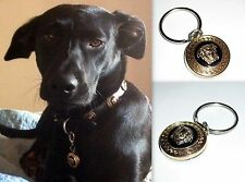 VERSACE GOLD MEDUSA HEAD DESIGNER PET DOG ID NAME TAG-BLING UP YOUR DOG