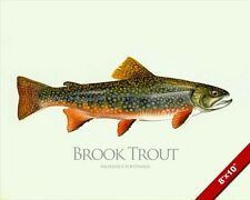BROOK TROUT FISH PAINTING AMERICAN FRESHWATER FISHING ART REAL CANVAS PRINT
