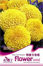 1 Pack 40 Yellow Aztec Marigold Seeds Yellow Tagetes Erecta Garden Flowers A005