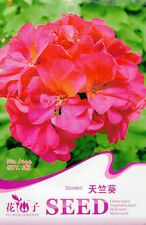 Original Package 6 Storkbill Seeds Pelargonium Graveolens Geraniums Flowers A144