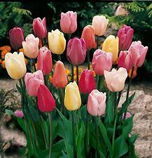 """20 x Tulip Misto """"TRIUMPH"""" Lampadine"""
