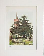 Tejo. - Montado Antiguo Litografía de Color, Impresión Botánica