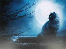 Black Cat Dark Night Moon Light Halloween