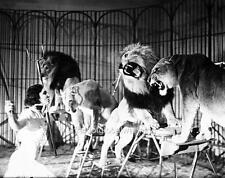 Photo.  1930s.  Touring Circus.  Lion Tamer