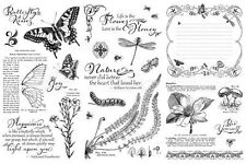 "GRAPHIC 45 ""NATURE SKETCHBOOK"" CLING STAMPS 1, 2 & 3  SCRAPJACK'S PLACE"