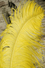 "2 YELLOW Ostrich FEATHERS 23-28"" Full Wing PLUMES Bridal/Wedding/Centerpiece"