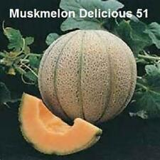1000 Seeds Delicious 51 Cantaloupe Seeds  New Seeds for 2016 Non-GMO Heirloom