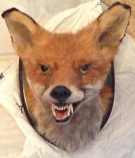 RED FOX HEAD WITH WOODEN PLINTH