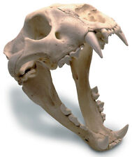 African Lion Skull With Stand Antique Finish 0205 New By Skullduggery