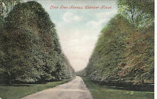 Lime Tree Avenue, Clumber House, THE DUKERIES, Nottinghamshire
