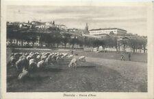 Pinerolo Piazza d'Armi - Animata Pecore al Pascolo - Torino - viaggiata 1931