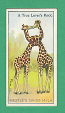 NESTLE'S  SWISS  MILK  -  RARE ADVERTISING / NOVELTY CARD  -  GIRAFFES  -  ????