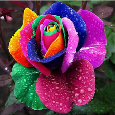 200Pcs Color Rainbow Rose Flower Seeds Home Garden Plants Multi-Color Yard