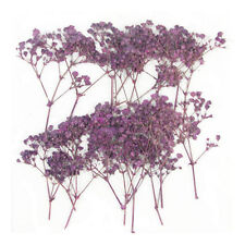pressed flowers, purple baby breath 20 pieces for art craft card making