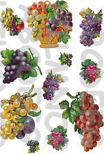 11 ADESIVI GRAPPOLI UVA FINESTRA WINDOW STICKERS CUCINA VETRI GRAPES FINESTRE