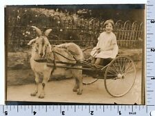 Girl in Goat Cart Photo | Knoxville 1926 | Animal Photograph